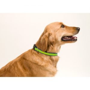 3063 COLLAR REFLECTANTE MUTTLEY